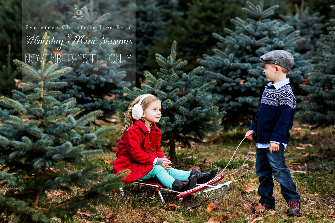 Christmas Tree Farm Photography.Pizzuti Cuties Photography Christmas Tree Farm Mini